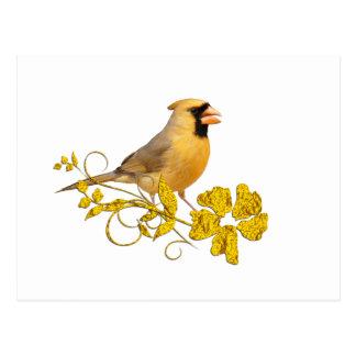 Belleza cardinal amarilla postales