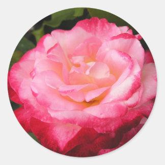 Belleza color de rosa: 2 entonaron al pegatina