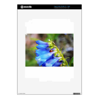 Belleza de Colorado Calcomanías Para El iPad 2