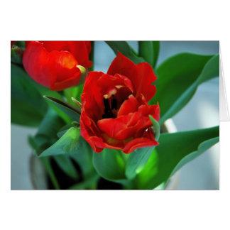 Belleza de florecimiento - tarjeta