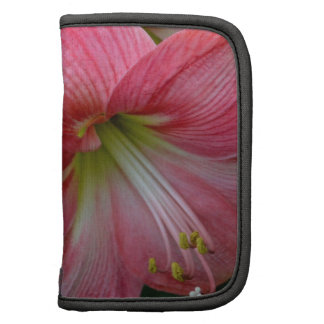 Belleza de la flor del Amaryllis Planificador