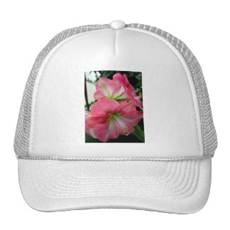 Belleza de la flor del Amaryllis Gorras De Camionero