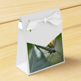 Belleza de la mariposa cajas para regalos
