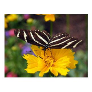 Belleza de la mariposa de la cebra tarjeta postal