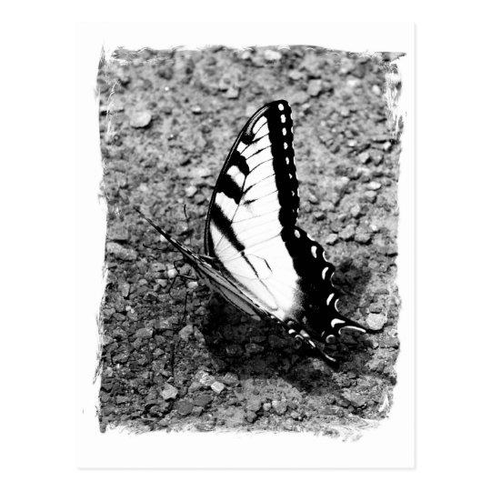 Belleza de la mariposa - insecto de B&W Postal