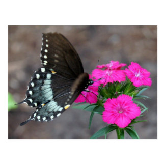 Belleza de la mariposa tarjeta postal
