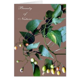 Belleza de la naturaleza #C108 Tarjeta De Felicitación