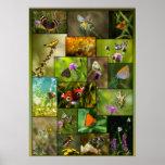 Belleza de las mariposas poster