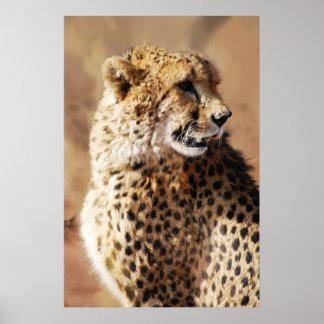 Belleza de los guepardos en África