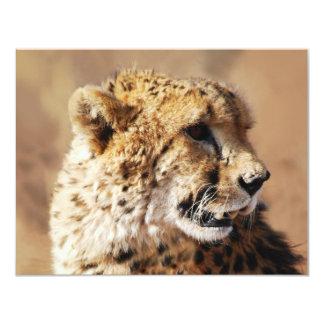 """Belleza de los guepardos en África Invitación 4.25"""" X 5.5"""""""