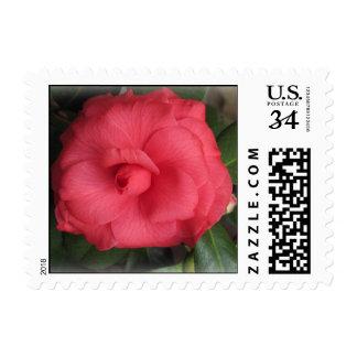 Belleza de un color de rosa sello