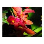 Belleza de un Orchid-2 Tarjetas Postales