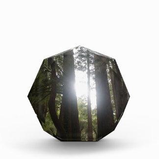 Belleza del bosque