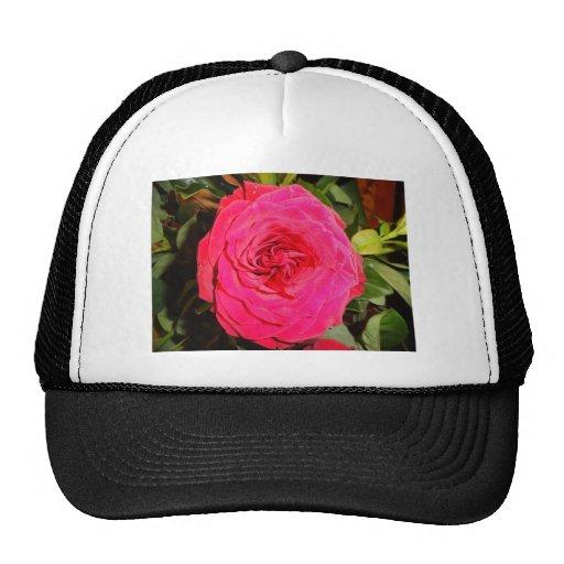 Belleza del color de rosa gorra