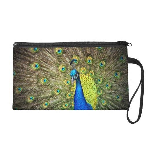 Belleza del color del pavo real