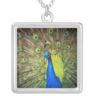 Belleza del color del pavo real colgante cuadrado