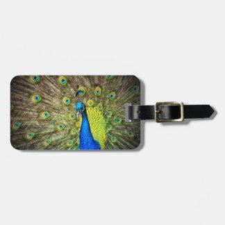 Belleza del color del pavo real etiquetas para equipaje