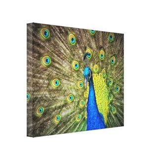 Belleza del color del pavo real impresión en tela