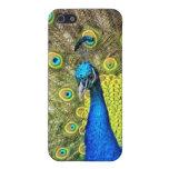 Belleza del color del pavo real iPhone 5 fundas