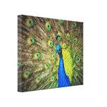Belleza del color del pavo real impresión en lona estirada
