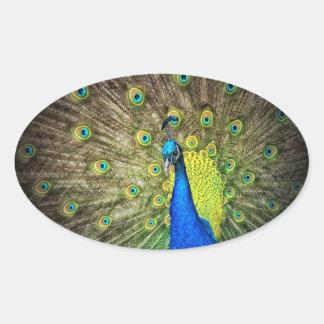 Belleza del color del pavo real pegatina ovalada