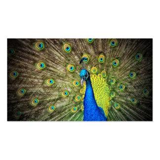 Belleza del color del pavo real tarjetas de visita