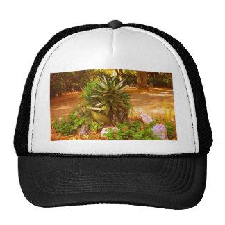 Belleza del desierto gorras
