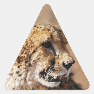 Belleza del guepardo con los colmillos pegatina triangular