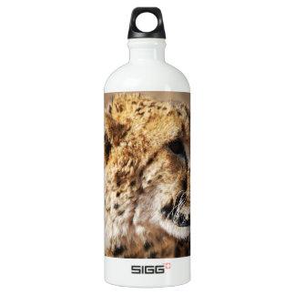 Belleza del guepardo con los colmillos