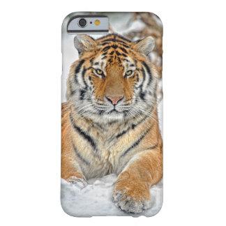Belleza del tigre en nieve