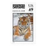 Belleza del tigre en nieve envio