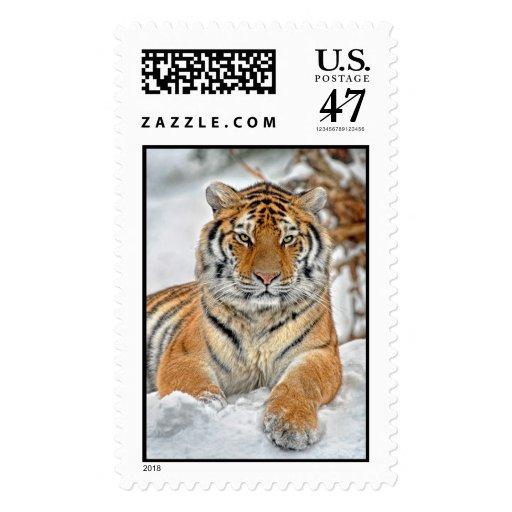 Belleza del tigre en nieve sello postal