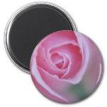 Belleza dentro del rosa iman de frigorífico