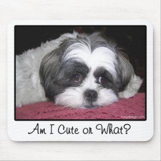 Belleza el perro de Shih Tzu Alfombrillas De Ratones