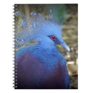 Belleza emplumada azul libretas espirales