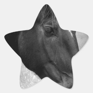 Belleza equina calcomanía forma de estrella