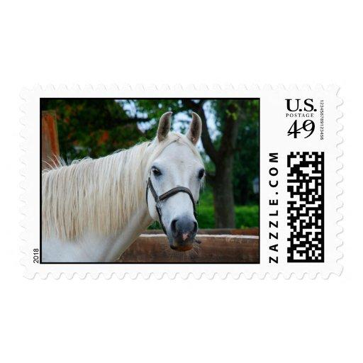 Belleza equina timbres postales