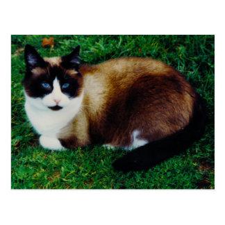 Belleza felina postal