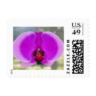 Belleza interna de una orquídea sellos