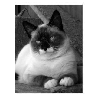 Belleza (negro y blanco) tarjeta postal