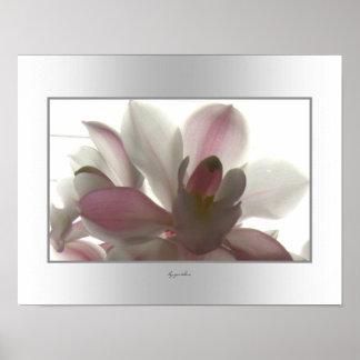 Belleza pálida de la orquídea póster