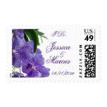 Belleza púrpura de la orquídea