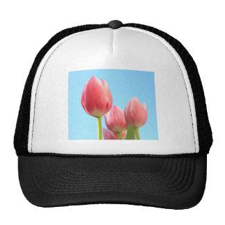 Belleza rosada de los tulipanes gorras