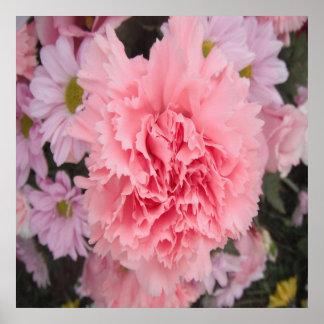 Belleza rosada del clavel del poster