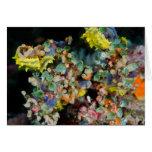 Belleza subacuática tarjeton