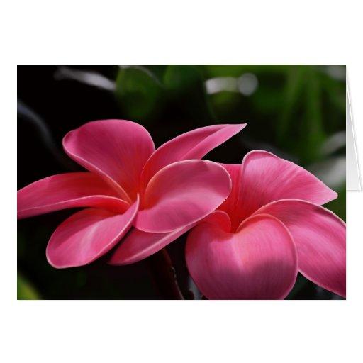 Belleza tropical - Plumeria Tarjeta De Felicitación