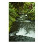 Belleza tropical tarjetas postales