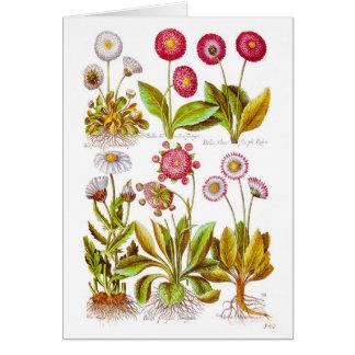 Bellezas en rosa tarjeta de felicitación