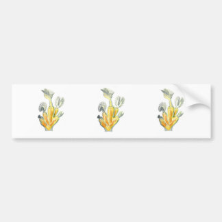 Bellflower or Crystal Moss Animal Bumper Sticker