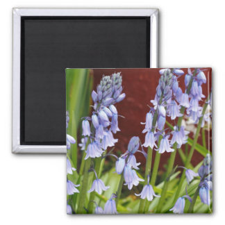 Bellflowers in Front of a Red Wall 2 Inch Square Magnet